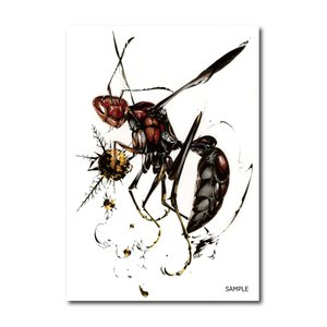 11 red paper wasp(猫将軍)|vanilla-gallery