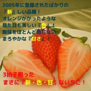 送料無料 やよいひめ 群馬県産 いちご 4パック 農家直送|vege-garden-asahi|02
