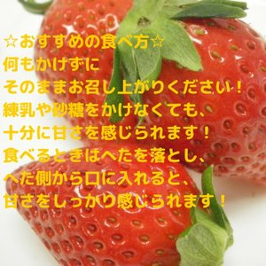 送料無料 やよいひめ 群馬県産 いちご 4パック 農家直送|vege-garden-asahi|03