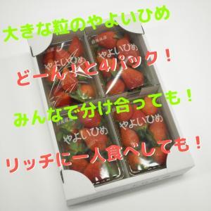 送料無料 やよいひめ 群馬県産 いちご 4パック 農家直送|vege-garden-asahi|04