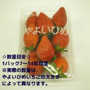 送料無料 やよいひめ 群馬県産 いちご 4パック 農家直送|vege-garden-asahi|05