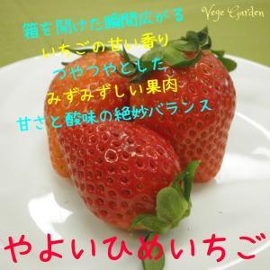 送料無料 やよいひめ 群馬県産 いちご 4パック 農家直送|vege-garden-asahi|06