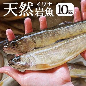 【完全予約制】【天然岩魚/10匹】自然の恵み 限定予約販売 青森県白神山麓便【冷凍便】|vegeko