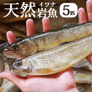 【完全予約制】【天然岩魚/5匹】自然の恵み 限定予約販売 青森県白神山麓便【冷凍便】|vegeko