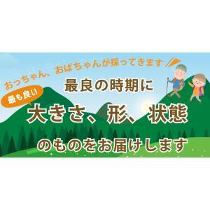 【天然山菜】【天然みず/600g】自然の恵み 限定予約販売 青森県白神山麓便 【送料無料】【クール便】|vegeko|10