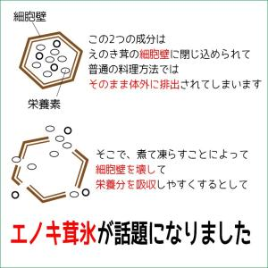 えのき えのき茸茶 鹿児島県産 エノキ茸 使用 ティーパック 1g×20袋 国産 送料無料|vegeko|05