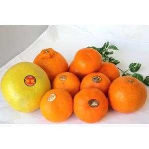 柑橘ギフト 今が旬の特別企画 あれもこれも食べてみたい 旬の柑橘ベスト5 詰め合わせ みかん ミカン 蜜柑 シトラス|vegetable-fruit-igh