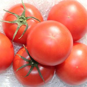 トマト フルーツトマト 度食べたら忘れられない…『秋山さんち...