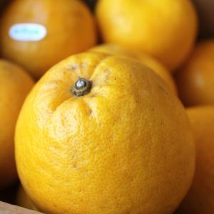 オレンジ グレープフルーツ ジューシーオレンジ さわやかな風味と多汁がたまらない和製グレープフルーツ 河内晩柑 1箱約6Kg|vegetable-fruit-igh