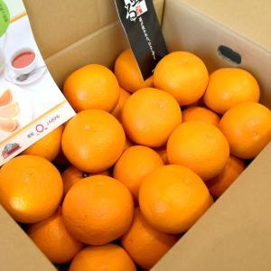 清見タンゴール 清見オレンジ 愛媛の柑橘ブランド 蜜る 5kg バラ詰め|vegetable-fruit-igh