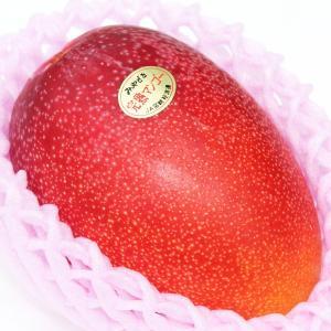 マンゴー 宮崎県産完熟マンゴ こだわりの極上フルーツ 甘さ抜群、コク深く、とろけるような舌触り 大玉1個|vegetable-fruit-igh