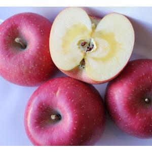 優良産地・信州飯綱高原の人気品種『サンふじリンゴ』約2.5kg(6〜8個) 林檎/りんご/リンゴ|vegetable-fruit-igh