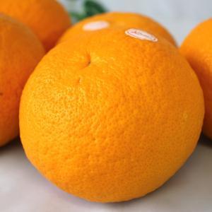 スルガエレガント 夏みかん 約10kg さわやかな甘さと香り 美味しい 夏ミカン 夏蜜柑|vegetable-fruit-igh