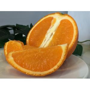 たんかん 鹿児島県産 おいしい柑橘 バラ詰め5Kg Mサイズ タンカン|vegetable-fruit-igh