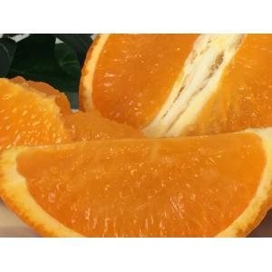 たんかん 鹿児島県産 おいしい柑橘 バラ詰め5Kg Mサイズ タンカン|vegetable-fruit-igh|03