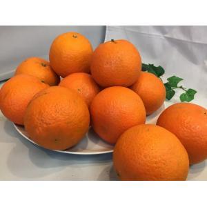 たんかん 鹿児島県産 おいしい柑橘 バラ詰め5Kg Mサイズ タンカン|vegetable-fruit-igh|04
