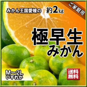 極早生みかん 極早生 みかん 愛媛県産 超早出し 約2kg M〜2L 初物 新物 送料無料|vegetable-fruit-pro