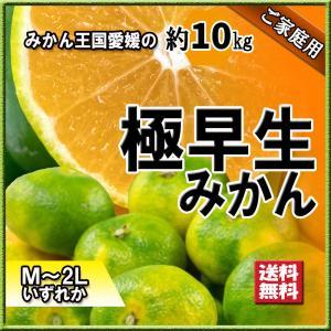 極早生みかん 極早生 愛媛県産 超早出し みかん M〜2L 約10kg 初物 新物 送料無料|vegetable-fruit-pro