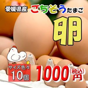 たまご 愛媛県 餌と生育にこだわった ごちそう卵 まとめ買い 10個 送料無料|vegetable-fruit-pro