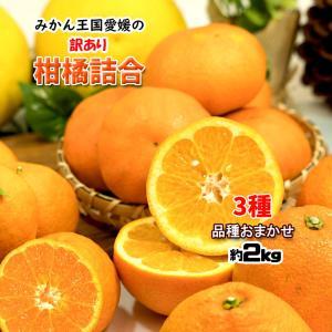 柑橘 訳あり 3種 詰め合わせ 福袋 愛媛県産 箱買い 約2.5kg 送料無料    お得な柑橘福袋...