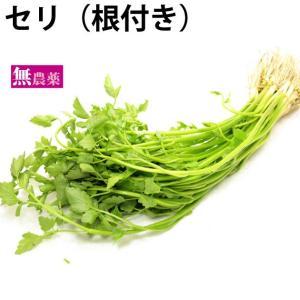 セリ(根付き)5把 茨城県産無農薬栽培。 送料無料...