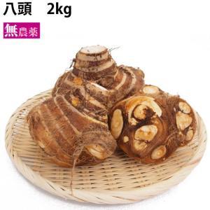 八頭 栃木県産 無農薬栽培 2kg 送料無料