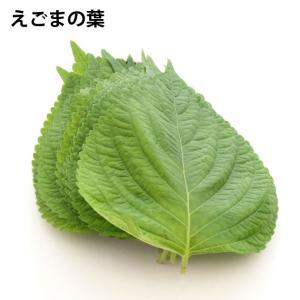 えごまの葉 10枚 無農薬栽培 10パック 送料無料