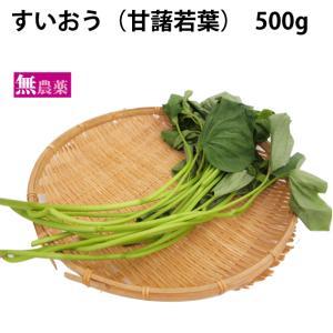 国産 無農薬 さつまいも サツマイモ 茎 葉 青汁 送料無料
