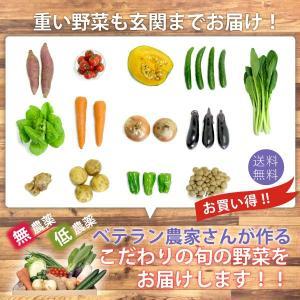 お買い得 野菜 野菜セット 無農薬 低農薬 13品目 こだわり野菜セット 送料無料 |vegetable-heart|03