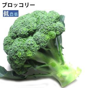 国産 ブロッコリー  低農薬栽培 4個 送料無料
