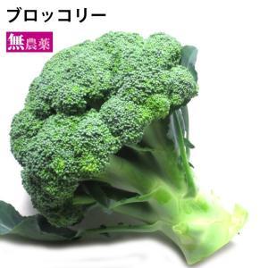 国産 ブロッコリー 1個 低農薬栽培 送料別 ポイント消化 食品