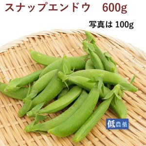 スナップエンドウ 500g  熊本県産低農薬栽培。 送料無料