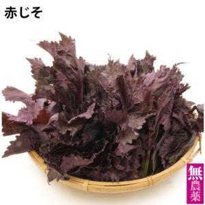 赤じそ 栃木県産 無農薬栽培 150g 3袋 送料無料