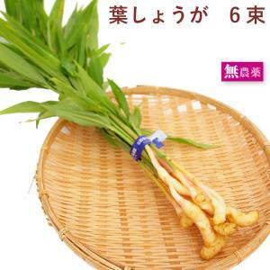 原材料:葉しょうが 5束  生産者:茨城 常総センター 商品説明:茨城県産、無農薬栽培です。 しょう...