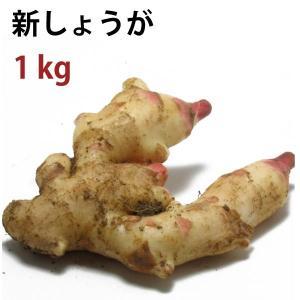 送料無料 新しょうが 高知県産 無農薬栽培  1kg