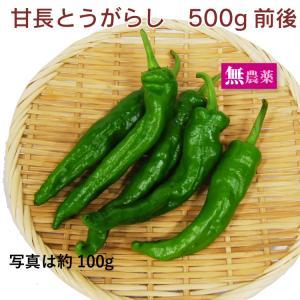 【万願寺とうがらし 500g】栃木県産無農薬栽培【送料無料】