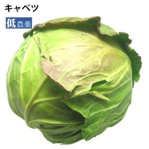 キャベツ  低農薬 1玉 送料別 ポイント消化 食品