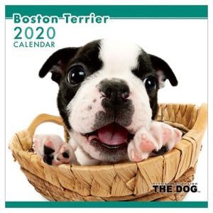 2020年 カレンダー ボストンテリア 壁掛け いぬ THE DOG 60×30cm 9月中旬発売予定 アニマル 写真|velkommen