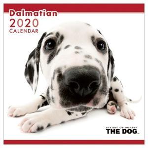 ダルメシアン 2020年 カレンダー 壁掛け THE DOG いぬ トライエックス 60×30cm 9月中旬発売予定|velkommen