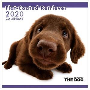 フラットコーテッドレトリーバー 壁掛け 2020年 カレンダー THE DOG いぬ 令和2年暦 アニマル 写真|velkommen