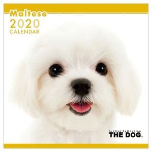 マルチーズ 2020年 カレンダー 壁掛け THE DOG いぬ トライエックス 60×30cm 9月中旬発売予定|velkommen