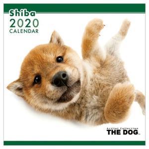 柴犬 壁掛け 2020年 カレンダー THE DOG いぬ 令和2年暦 アニマル 写真 トライエックス 60×30cm|velkommen