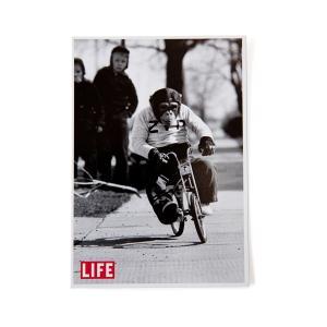 LIFE(ライフ) ポストカード【自転車】 velove