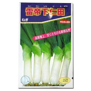 野菜の種/種子 雷帝下仁田ねぎ 6ml (メール便可能)サカタのタネ|vg-harada