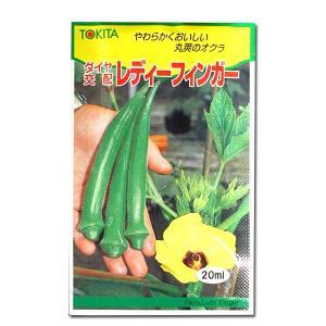野菜の種/種子 レディーフィンガー・オクラ 20ml (メール便可能)|vg-harada