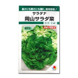 野菜の種/種子 岡山サラダ菜・サラダナ 2ml (メール便可能)タキイ種苗|vg-harada
