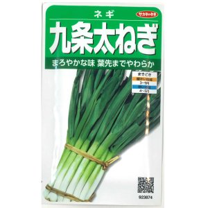 野菜の種/種子 九条太・ねぎ 15ml (メール便可能)サカタのタネ|vg-harada