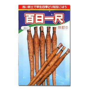 野菜の種/種子 百日一尺・ごぼう 20ml (メール便可能)|vg-harada