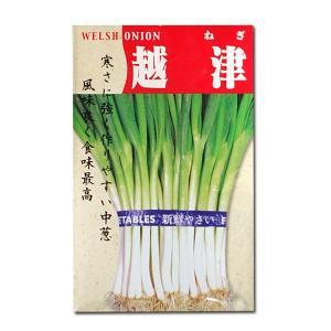 野菜の種/種子 越津・ねぎ 20ml (メール便可能)|vg-harada