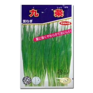 野菜の種/種子 九条・ねぎ 15ml(メール便可能)サカタのタネ 種苗|vg-harada